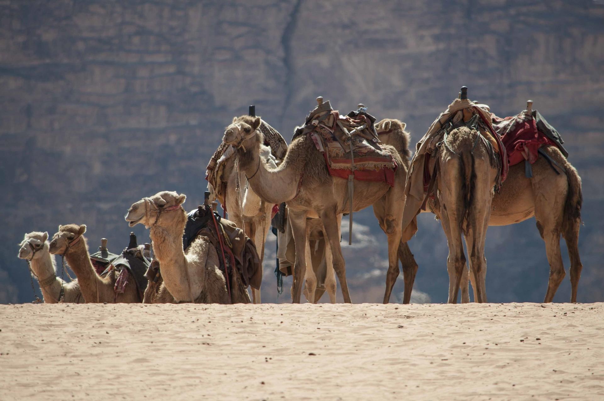 jordanien auswärtiges amt